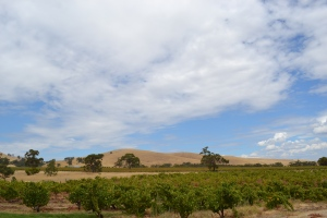 View of the vineyards at Charles Melton