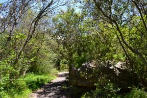 Vegetation at the Gap